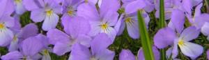 cropped-P50100313.jpg
