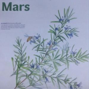 plantes-mars