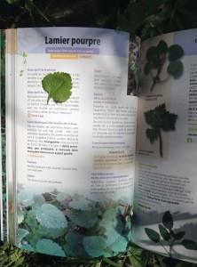 Lamier 1