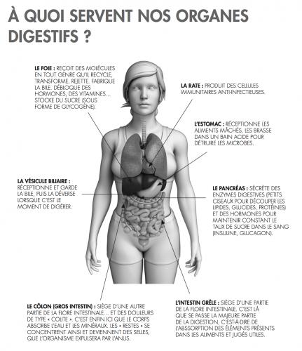 Organes digestifs