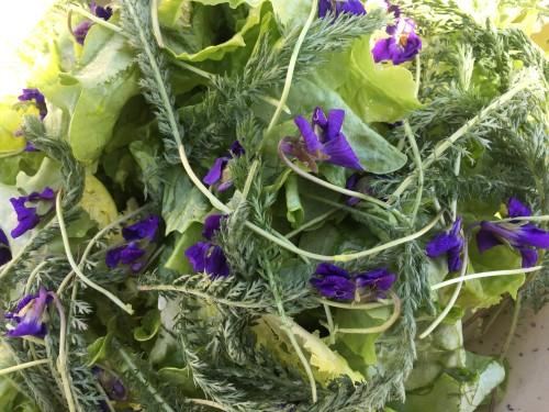 Salade violettes 2