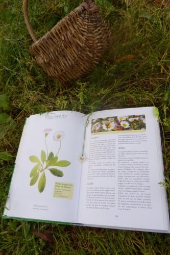 Connaître les plantes sauvages