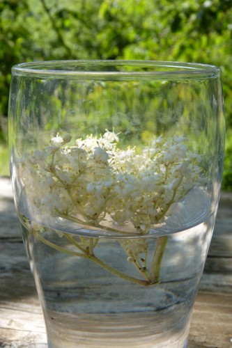 Gourmandises aux fleurs de sureau
