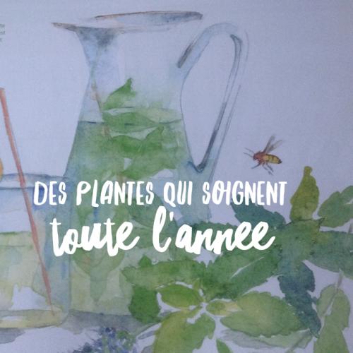 des plantes qui soignent toute l ann e l 39 herberie du beaumont. Black Bedroom Furniture Sets. Home Design Ideas